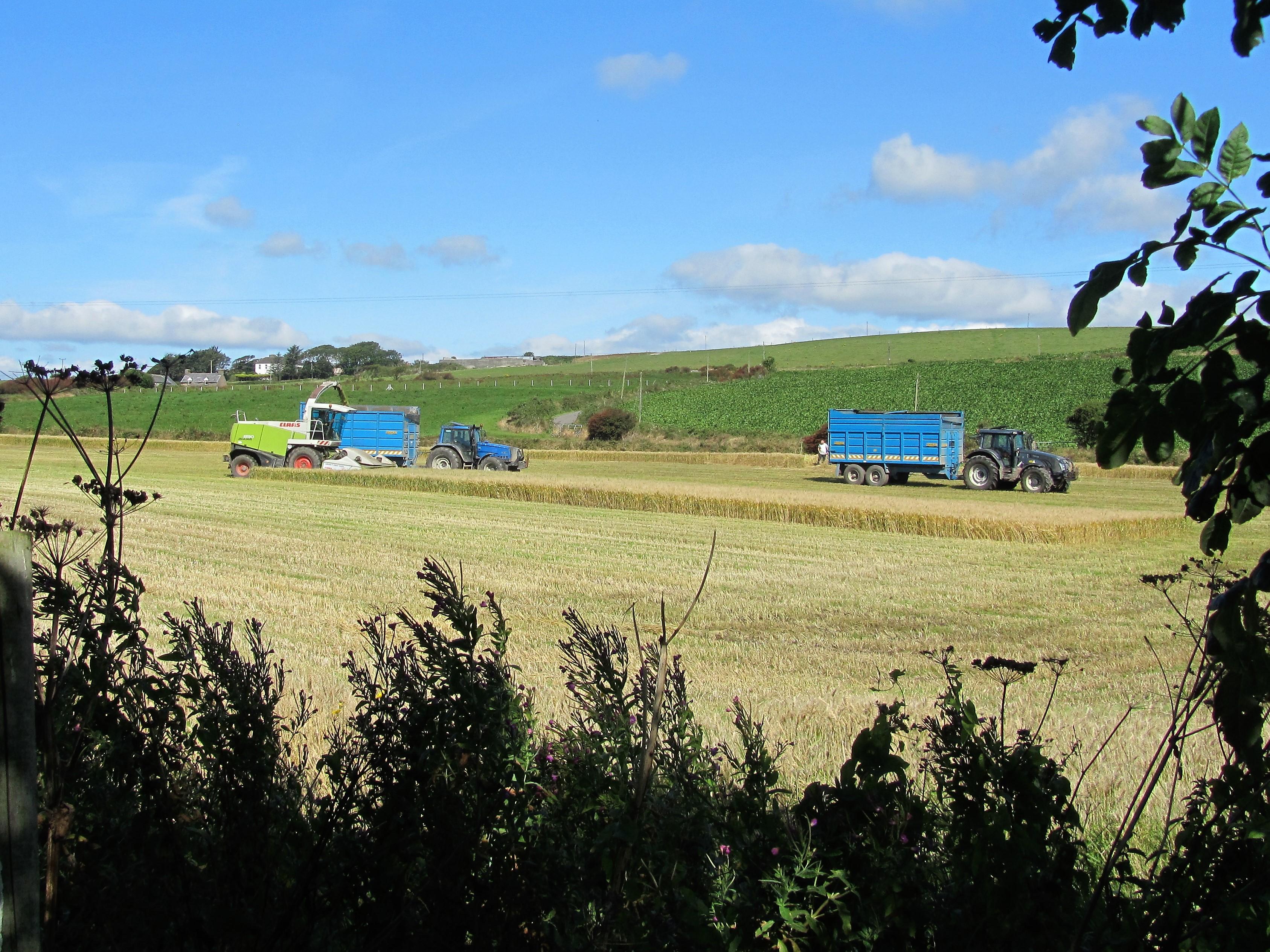 Harvesting next to Ballynoe House