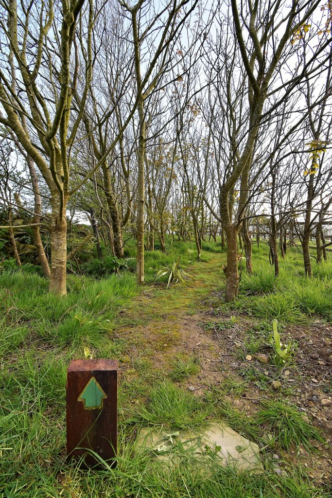 The Start of the Ballynoe House Woodland Trail