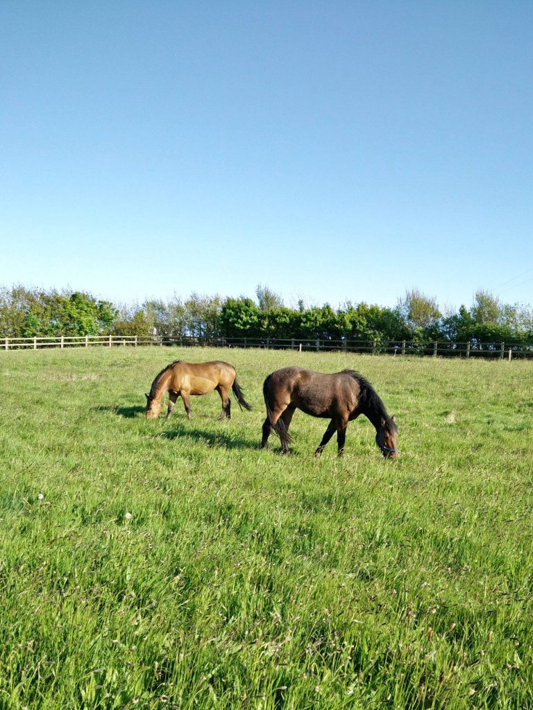 Horses grazing the Paddock at Ballynoe House