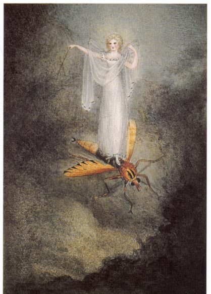"""The Moth Fairy"" by Amelia Jane Murray, Lady Oswald, (1800-1896)"