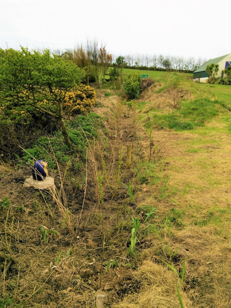 Rehabilitation of the Lower Meadow margins