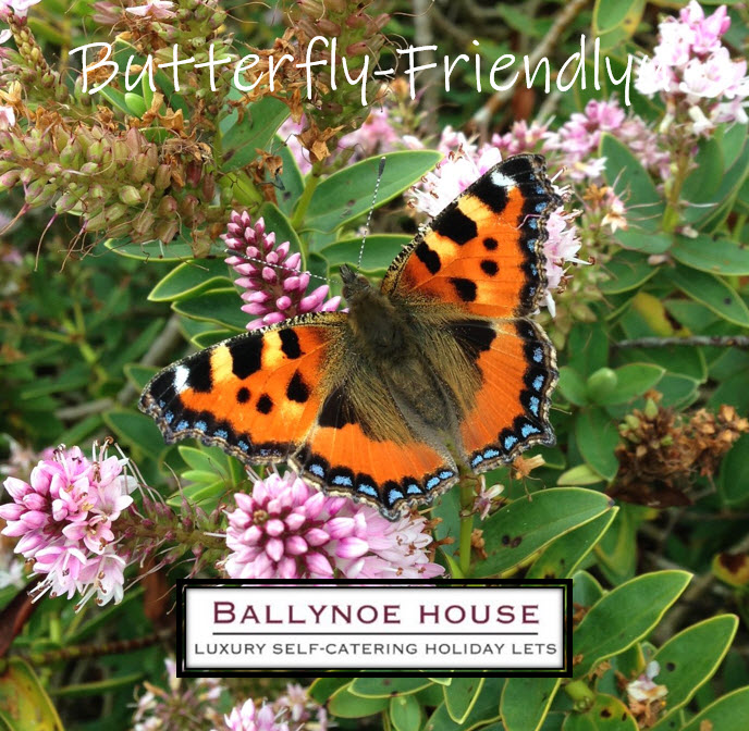 Ballynoe House is Butterfly-Friendly