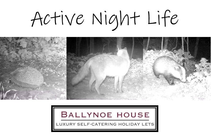 Wildlife Camera Action at Ballynoe House