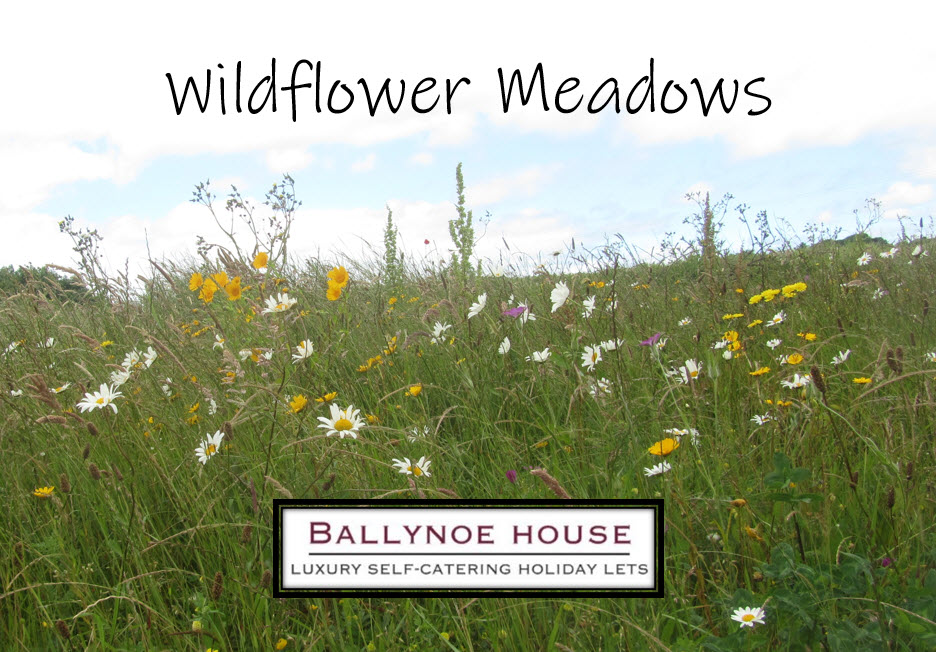 Ballynoe House has Wildflower Meadows